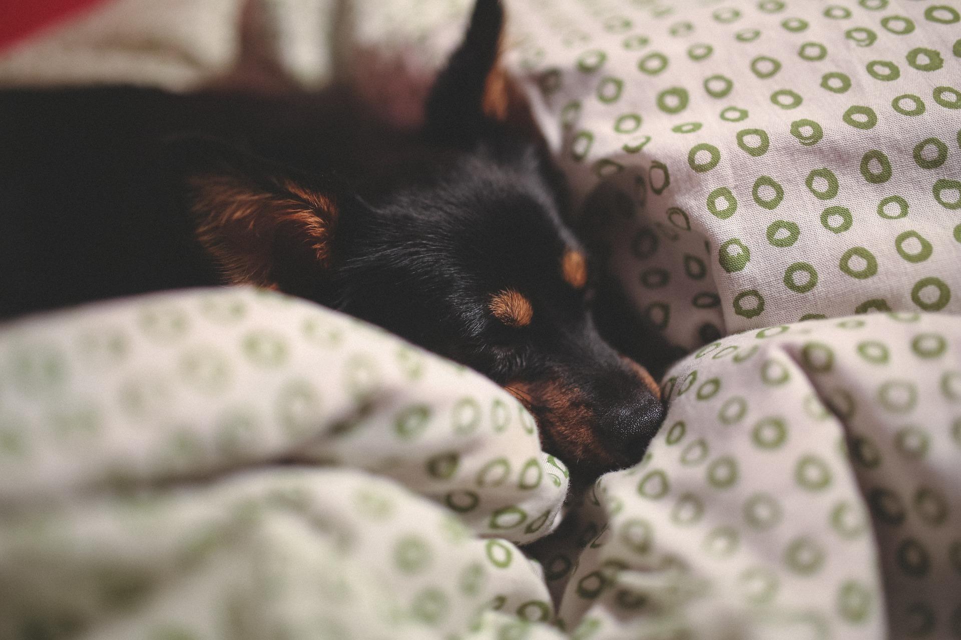 Juegos de sabanas ideales para dormir con tu mascota