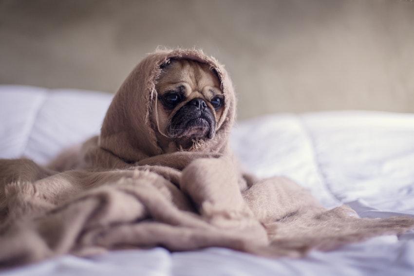 ropa cama invierno